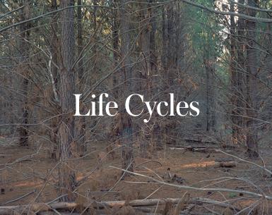 LIFECYCLES-THUMBNAILS